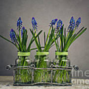 Hyacinth Still Life Art Print