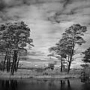 Infrared Picture Of The Nature Area Dwingelderveld In Netherlands Print by Ronald Jansen