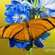 Julia Butterfly Art Print