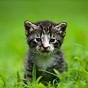 Kitty In Grass Art Print