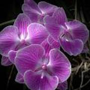Orchid Dream Art Print