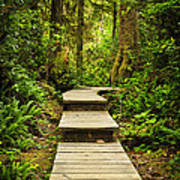 Path In Temperate Rainforest Print by Elena Elisseeva