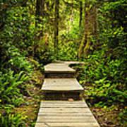 Path In Temperate Rainforest Art Print