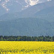 rapeseed field in Brnik with Kamnik Alps in the background Art Print