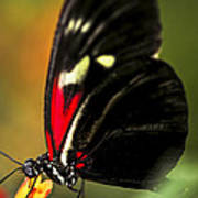 Red Heliconius Dora Butterfly Art Print by Elena Elisseeva