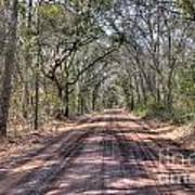 Road To Angel Oak Art Print