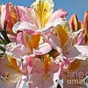 Sunny Petals Art Print
