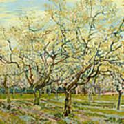 The White Orchard Art Print