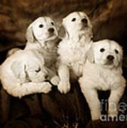 Vintage Festive Puppies Art Print by Angel  Tarantella