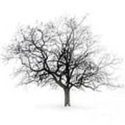 Winter Tree In Fog Art Print by Elena Elisseeva