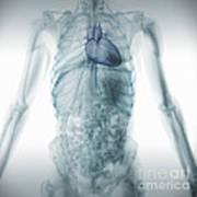 Human Anatomy Art Print