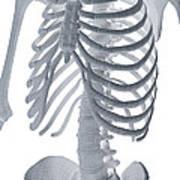 Bones Of The Torso Art Print