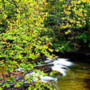 Cherry Falls Elk River Art Print