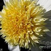 Dahlia Named Platinum Blonde Art Print