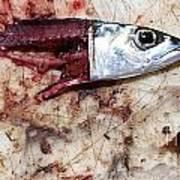 Fish Bait Art Print