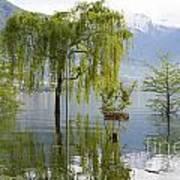 Flooding Alpine Lake Art Print