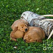 Golden Retriever Puppies Art Print by Linda Freshwaters Arndt