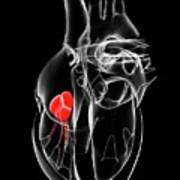 Heart Valve Art Print
