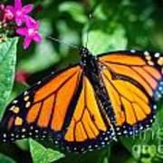 Monarch Danaus Plexippus Art Print