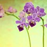 Purple Orchid-8 Art Print