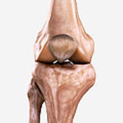 Right Knee Bones Art Print