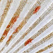 Seashell Surface Art Print