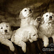 Vintage Festive Puppies Art Print by Angel  Tarantella