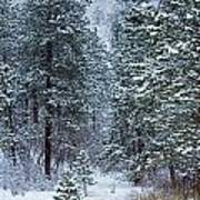 Winter In Pike National Forest Art Print