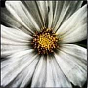 50 Shades Of Flower Art Print