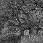 50 Shades Of Gray Trees Art Print