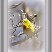 5393-006 - Pine Warbler-fb Art Print