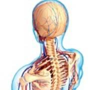 Upper Body Anatomy Art Print
