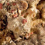 Cheilostomata Bryozoan Art Print