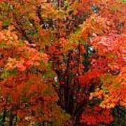 Fall Explosion Of Color Art Print