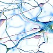 Nerve Cells Art Print
