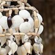 Sea Shell Decorations Art Print