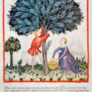 Tacuinum Sanitatis, Medieval Health Art Print