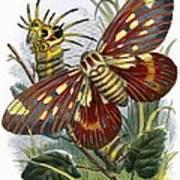 The Butterfly Vivarium Art Print
