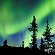 Yukon Taiga Spruce Northern Lights Aurora Borealis Art Print