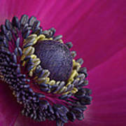 Anemone Art Print by Mark Johnson