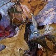 Colors Of The Fall Art Print