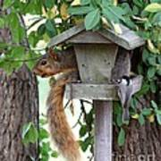 Eastern Fox Squirrel Art Print