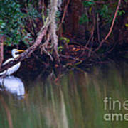 Great White Heron At Waters Edge Art Print