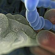 Halitosis Bacteria Art Print