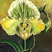 Ladyslipper Orchid Art Print