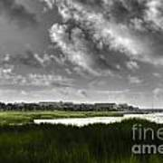 Southern Tall Marsh Grass Art Print