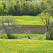 Spring Farm Landscape With Dandelion Bloom In Maine Art Print