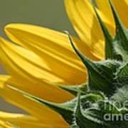 Sunflower From The Color Fashion Mix Art Print