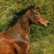 The Bay Horse Art Print