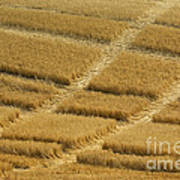 Tracks In Field Art Print